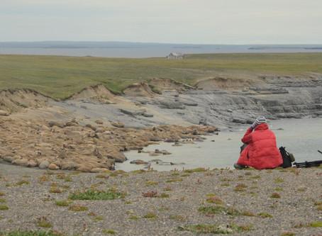 Лежбища моржей на о-вах Вайгач и Матвеев - жемчужина Печорского моря
