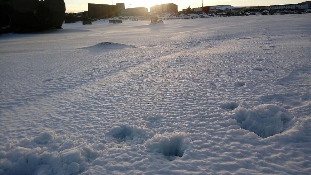 Следы белого медведя на территории села Рыркайпий
