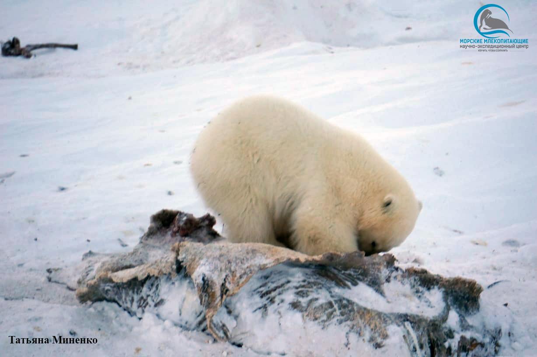 годовалый медвежонок - сирота