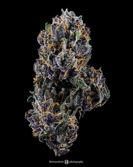 Purple Dream Mr White.jpg