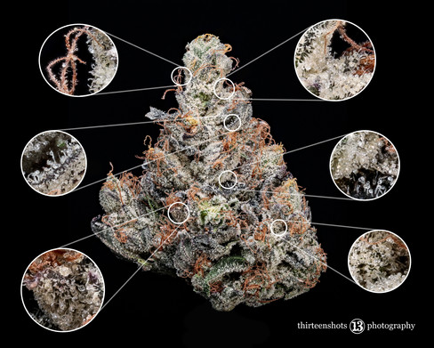 Bruce Banner Highgrade 2018 Magnified 13.jpg