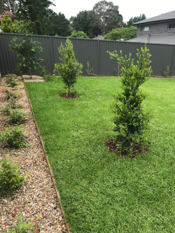 Betacon Landscaping - trees
