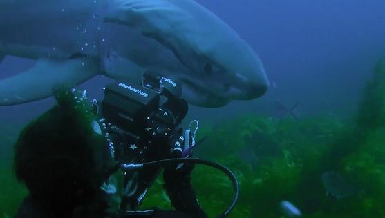 sharkweek.png