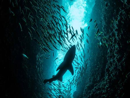 Get sharky 🎬 Les documentaires en compétition !
