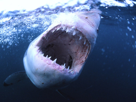Nouveau Shark Thriller UK: SOMETHING IN THE WATER