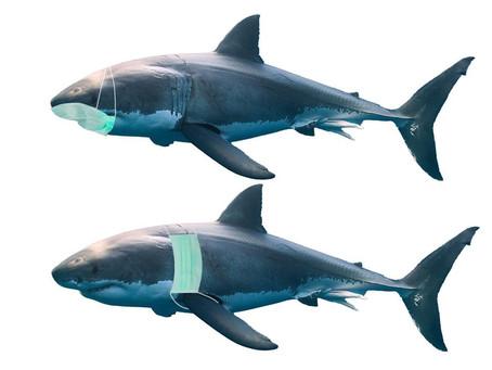 Requins et Covid: les mesures sanitaires du festival