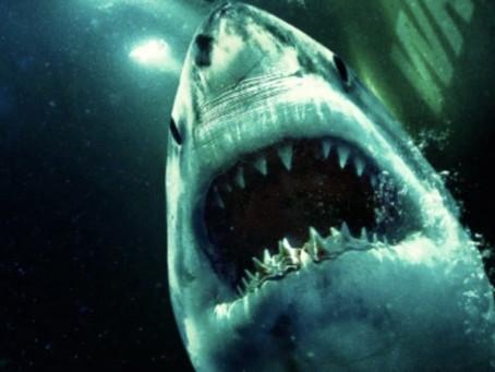 Nouveau film de requin : The Wreck