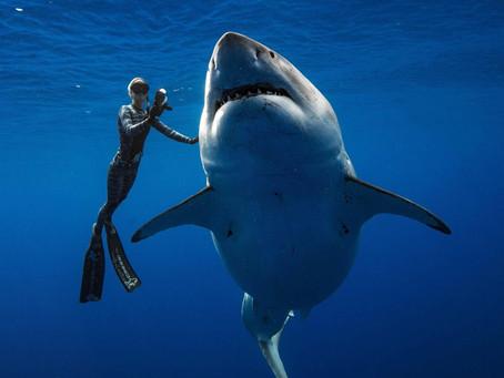 Ocean Ramsey: invitée d'honneur du Paris Shark Fest !