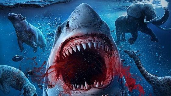 Noahs-Shark-banner-750x422.jpg