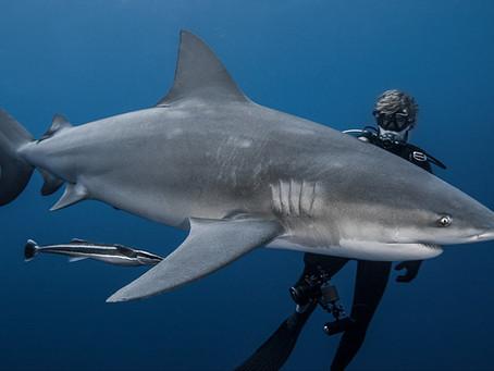 Gagnez des places et pass festival en soutenant le film Shark Education !