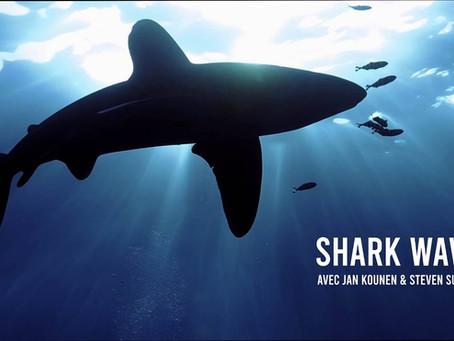 Regardez Shark Wave avec Jan Kounen gratuitement sur parissharkfest.com !