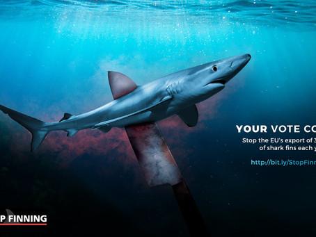 Sauvez les requins, signez la pétition de Sea Shepherd !