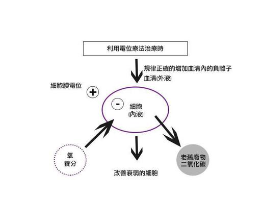 電位療法|生理作用機制