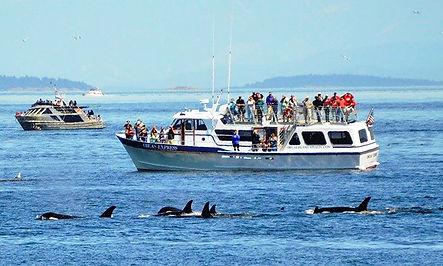 Orcas Express.jpg