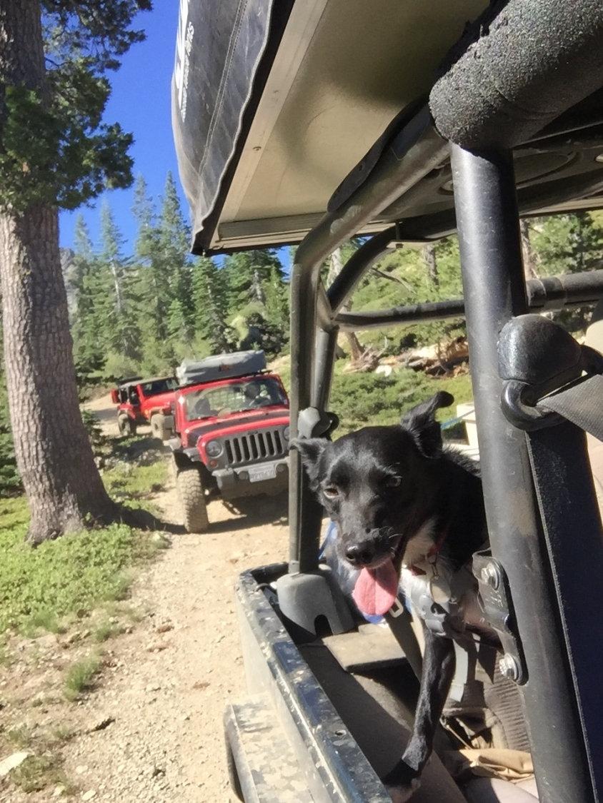 jeep dog.JPG