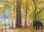 Logan Canyon Bear.jpg
