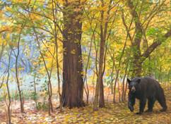 Logan Canyon Bear