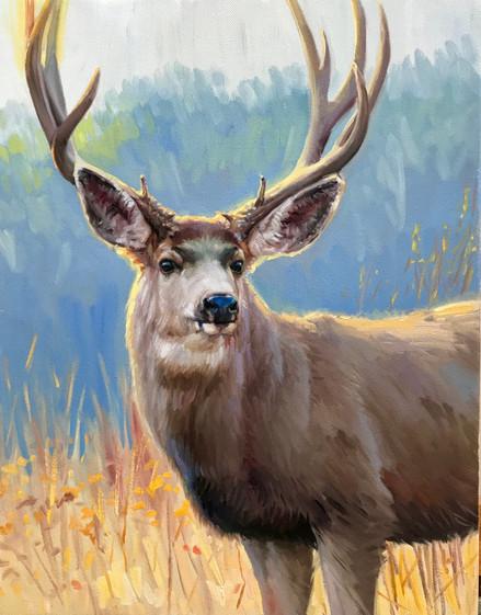 Afternoon Mule Deer