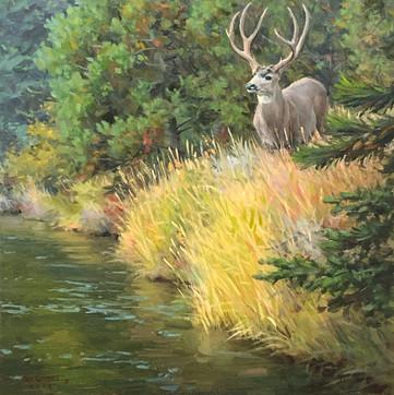 Teton Muley