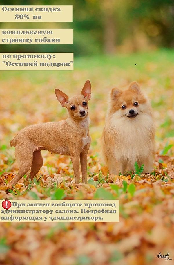 собаки осень.jpg