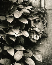 Leaf & Stone