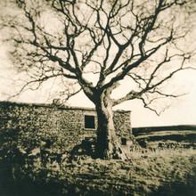 Sycamore & Barn
