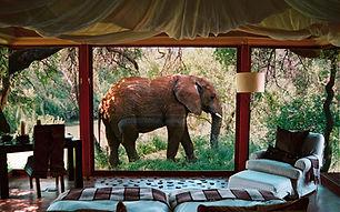 Canberra Kamala wildlife lodge.jpeg