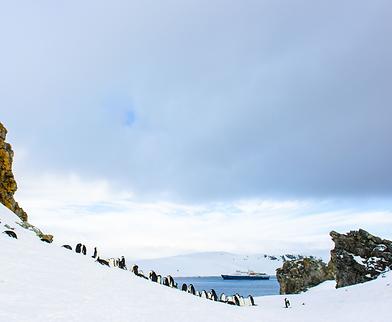 BLAST Antarctica Wildlife
