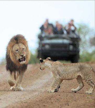 BLAST African Private safari