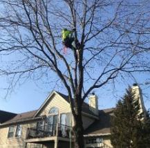 Kramer Tree Winter Discount 2021