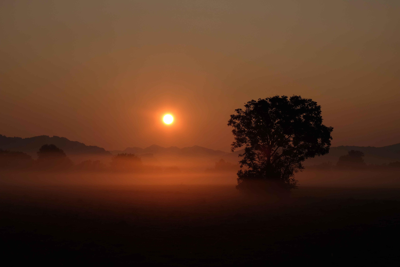 Sonnenaufgang im Ried 1