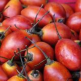 tree-tomato-1849374_1920_edited.jpg