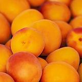 apricots-3433818_1280.jpg