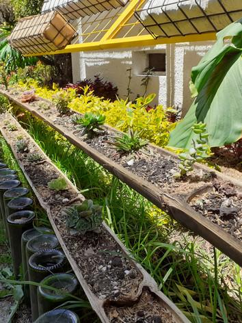 Mini jardines ornamentales