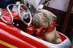 Cara de perro al volante