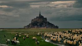 Mont St Michel con ovejas