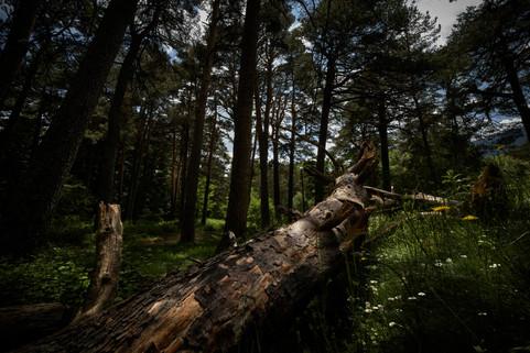 La luz del árbol caído