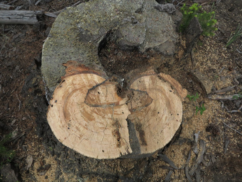 Sampling stumps