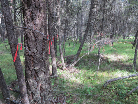 forest infilling