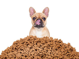 Dog Treat Sale