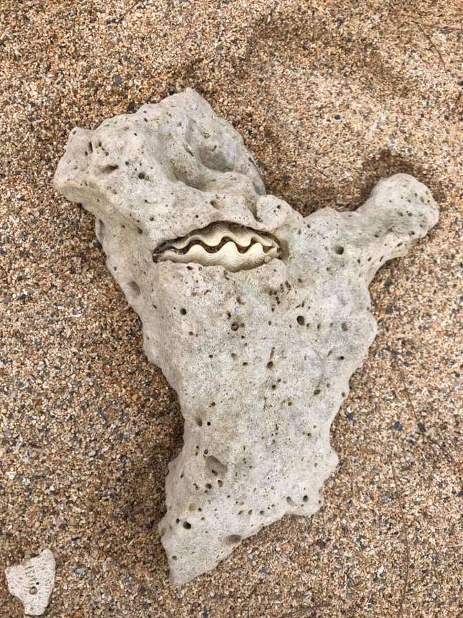 石の中のシャコ貝