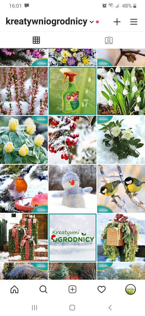 IG Kreatywni ogrodnicy  przykład 1.jpg