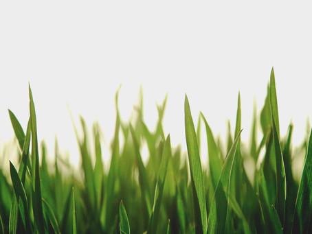 The environmental awakening in sport (2013)