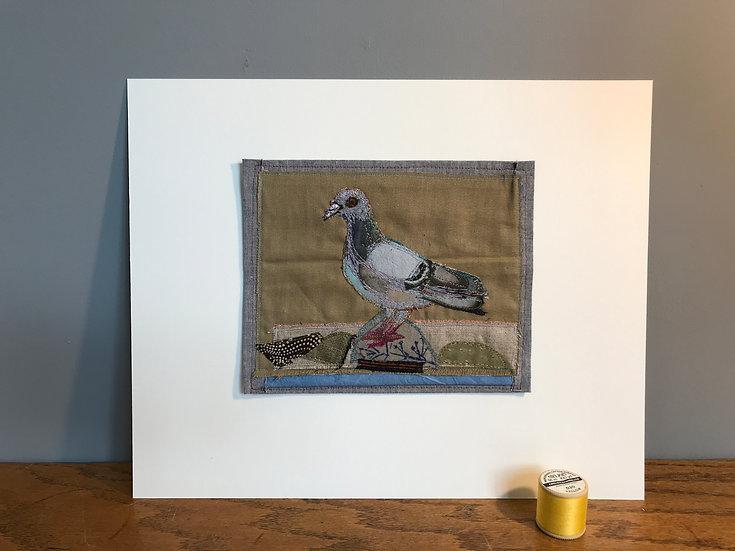 Columbidae Pigeon