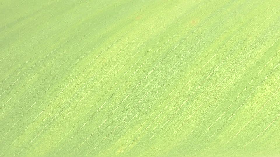 leaf-176722_960_720_edited_edited_edited