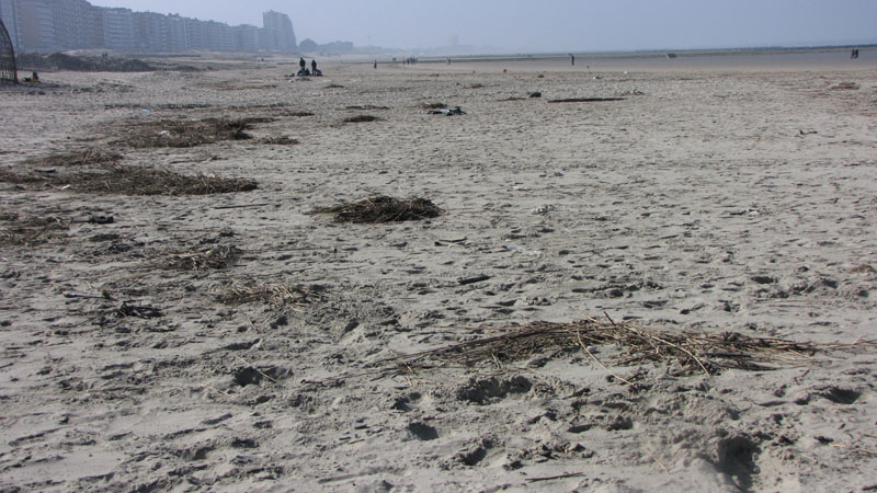 d'hooghe beachcleaners - WDH