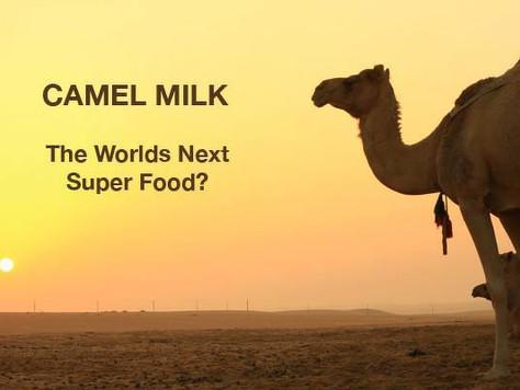 CAMEL MILK -  A SUPERFOOD