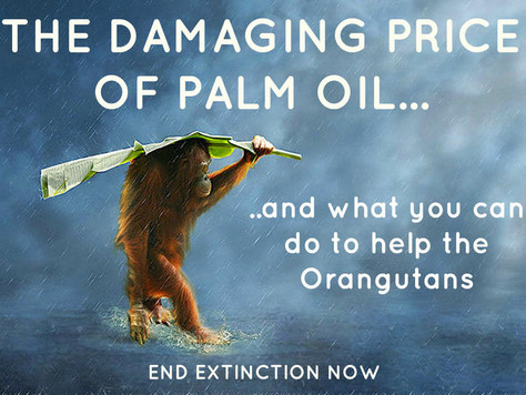 END EXTINCTION OF THE ORANGUTANS