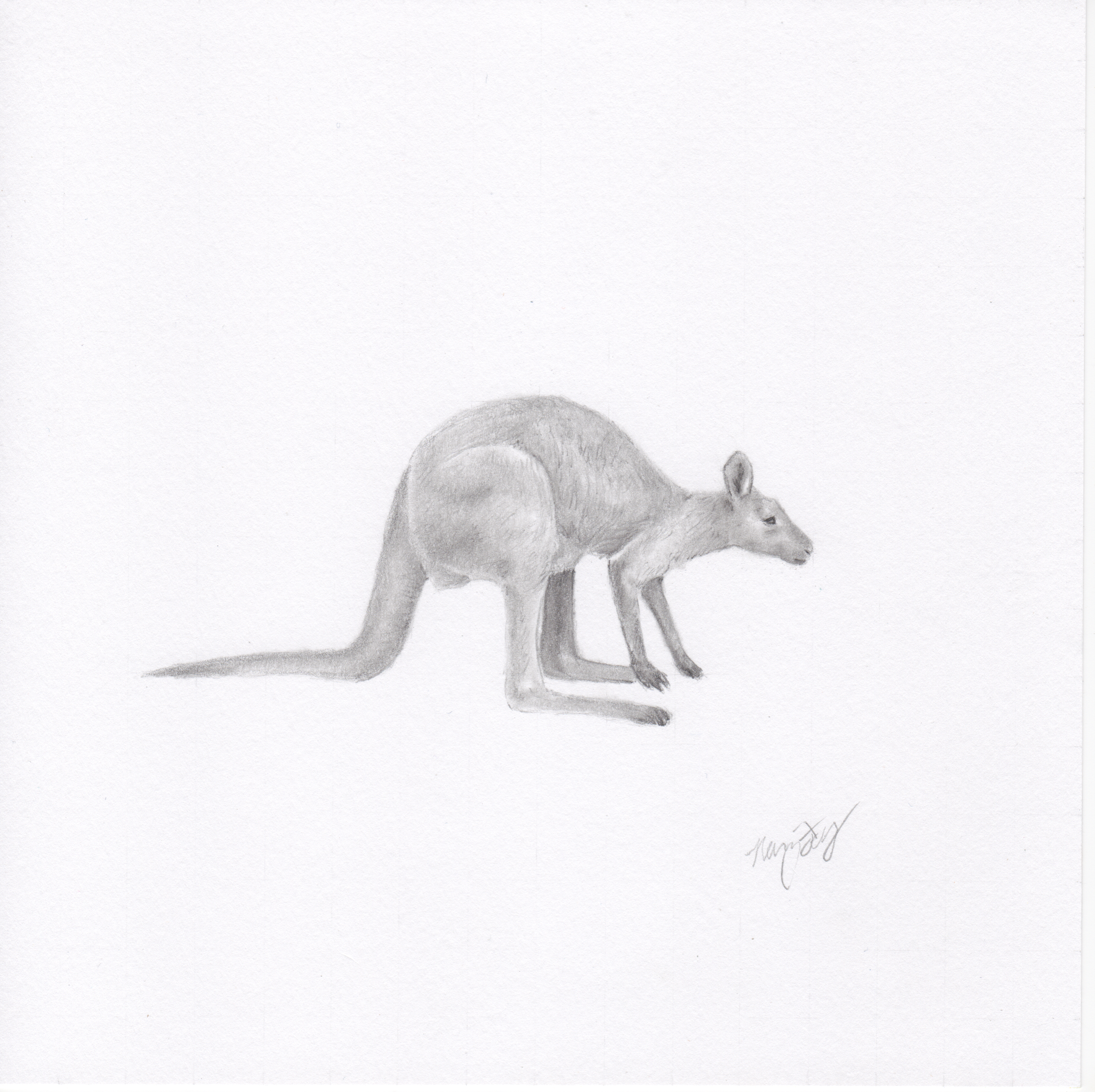 """Wallaby"""