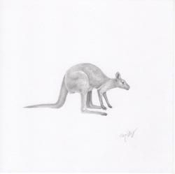 """Wallaby"""